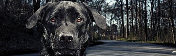 Vento - Wandern mit Hund